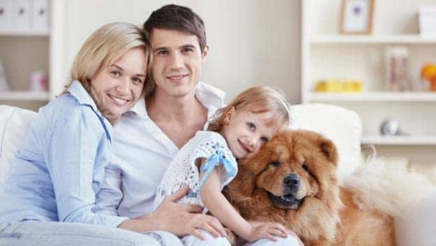 Wills & Trusts dog-young-family Direct Wills Fareham